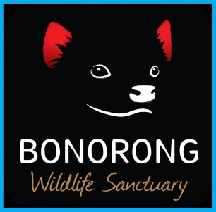 Bonorong_Vocal Animal image template